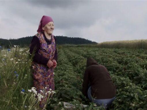 Maria Kowalik / film