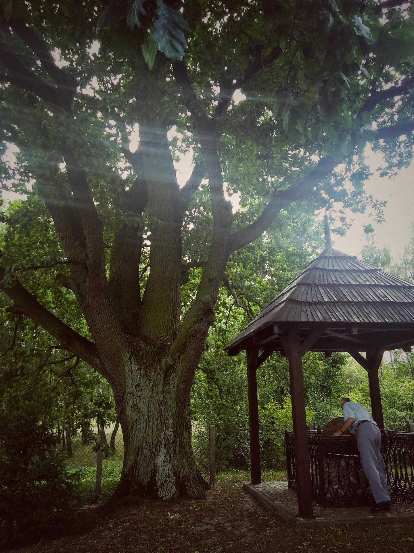 Studnia pod drzewem przy kaplicy na puszczy w Dobrowie. Fot. Joanna Skowrońska